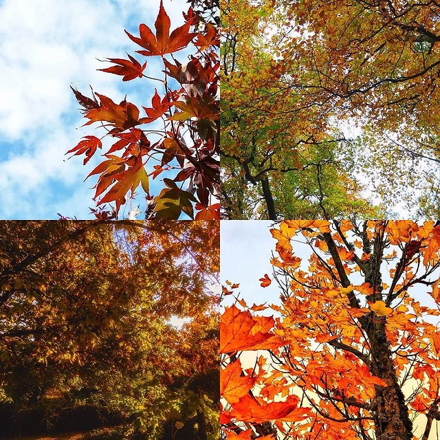 Wow, such brilliant colours in the #autumncolourloving gallery. These leafy photos are by @jennifercockcroft @thelinencloud @marcosignori @susankmann Do keep adding your photos to the gallery and I will share some more soon