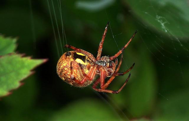 SPIDER SPINNING LESSONS......