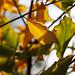 Botanic Gardens Edinburgh Oct 2017 -58