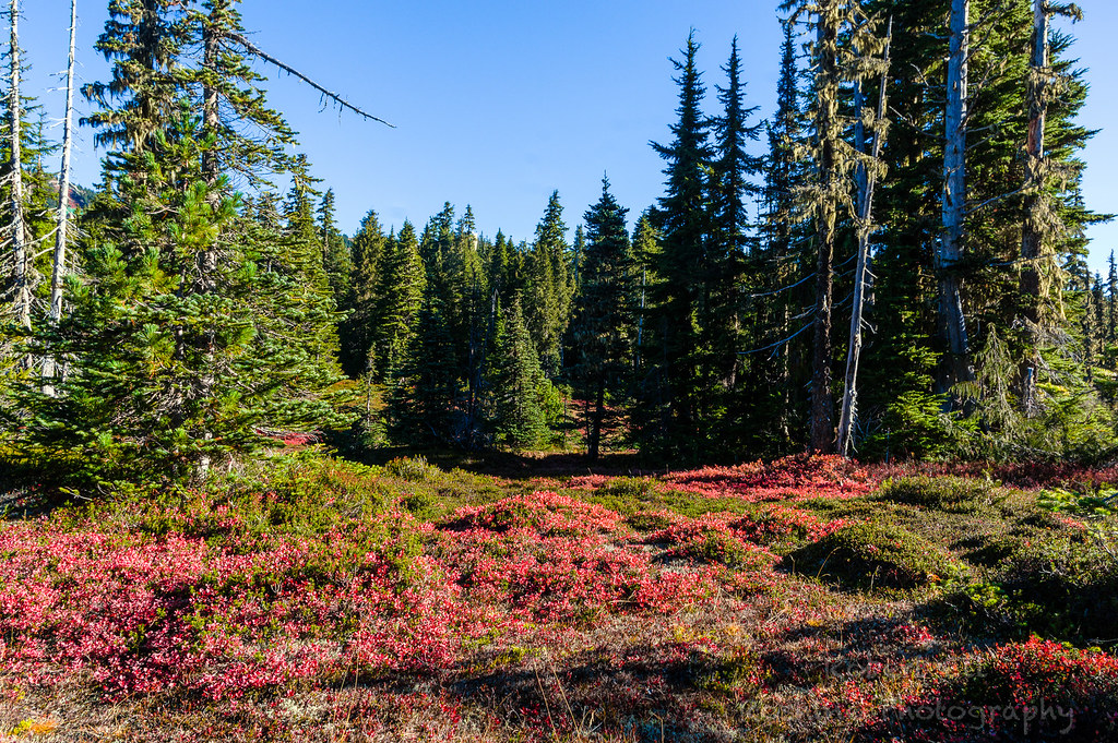 Hiking Mount Washington Vancouver Island