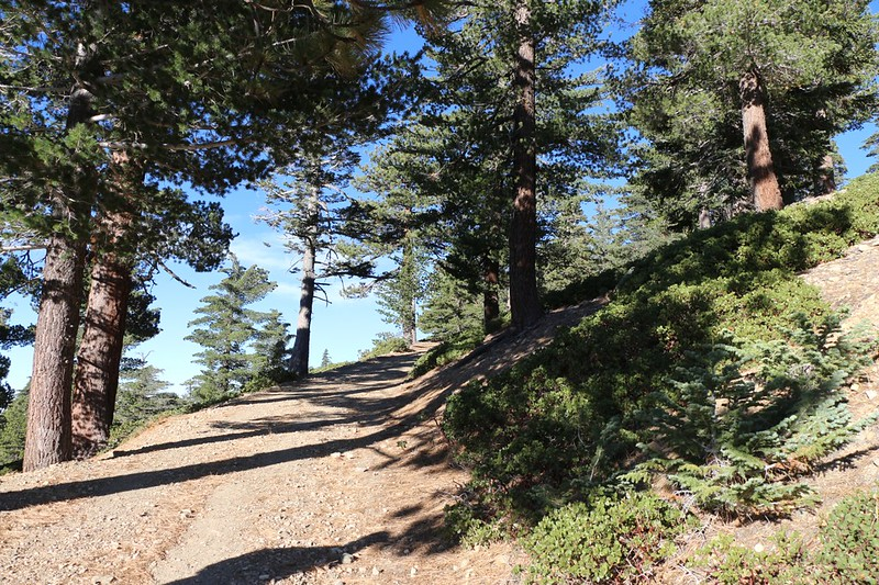We continue up the road to the top of the ski lift where the Devils Backbone Trail begins