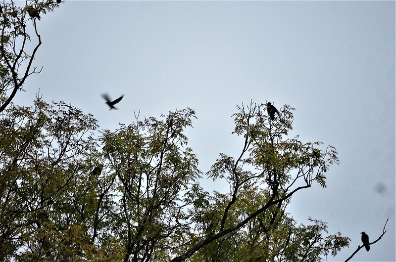 Crows 08.10 (5)