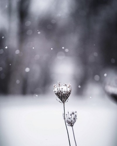 Snow Bokeh. Holt, Michigan. Photographer Dan Price