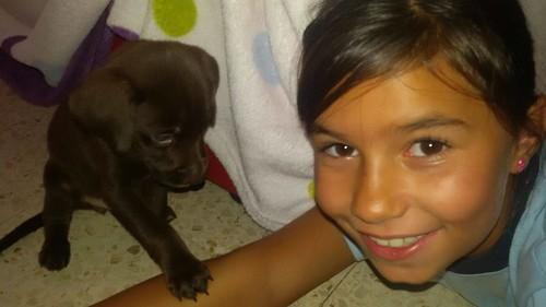 ACAN rescata cinco cachorros abandonados