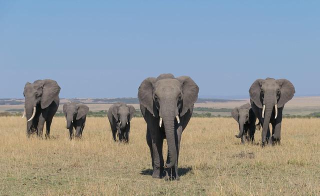 African Safari. The family.