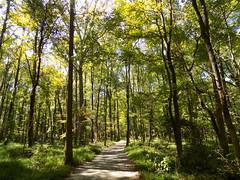Huntley Meadows Park, VA