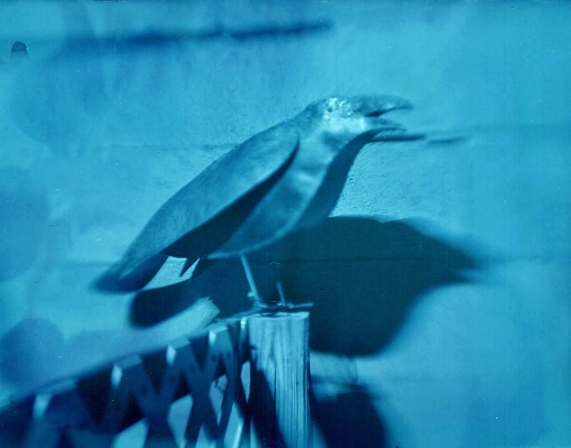 Raven Test001 (1)