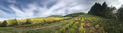 Beaujolais - col