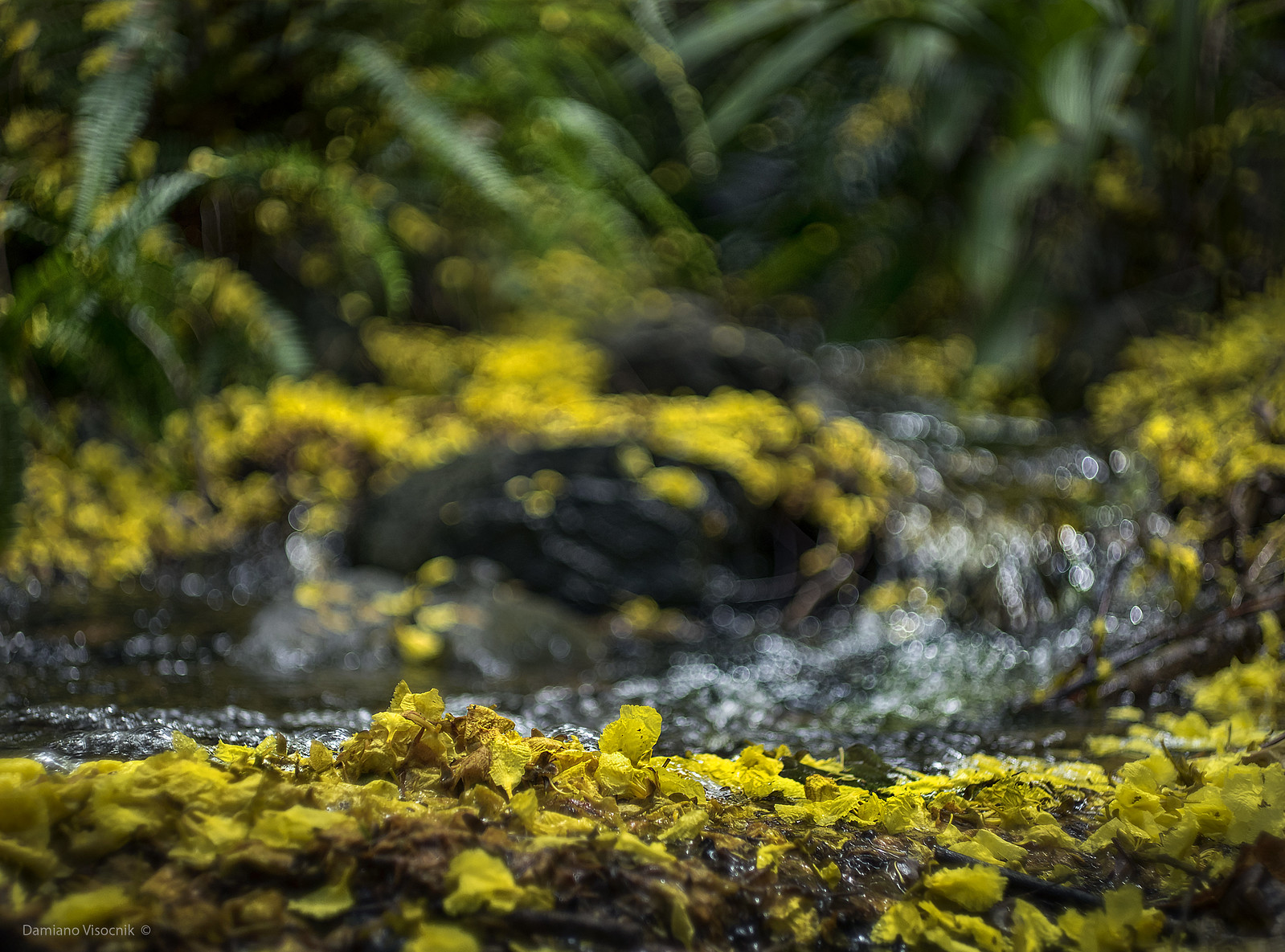 yellow carpet creek