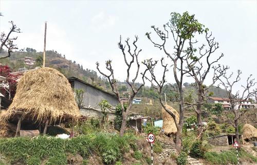 n-pokhara-Pagode-Paix-descente (8)