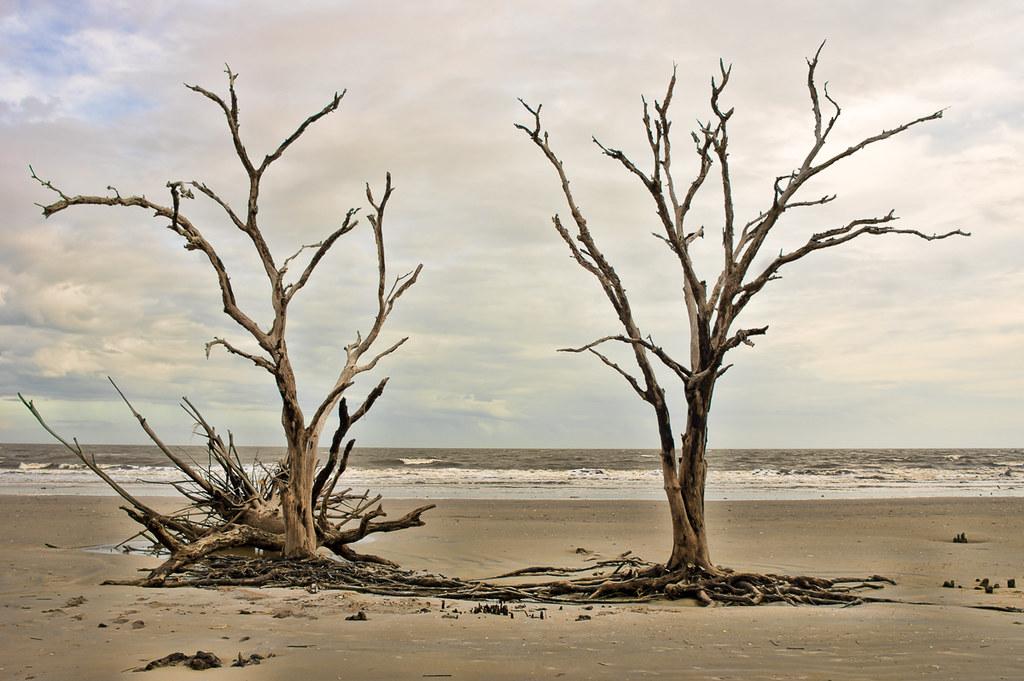Driftwood Beach 3