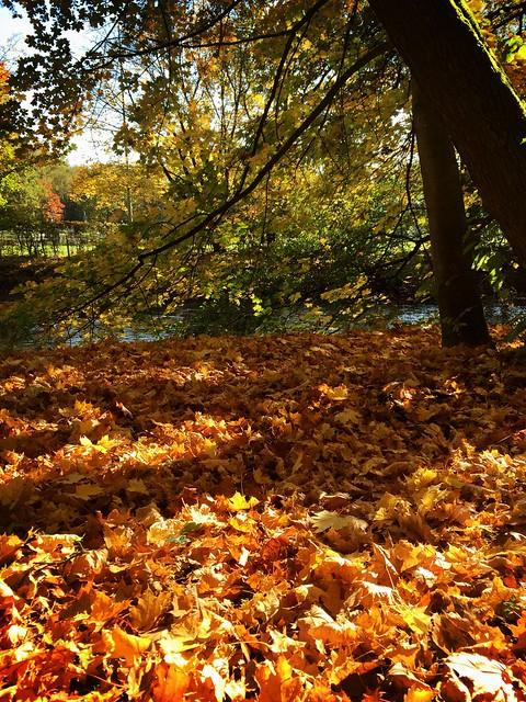 Herbst in Stein