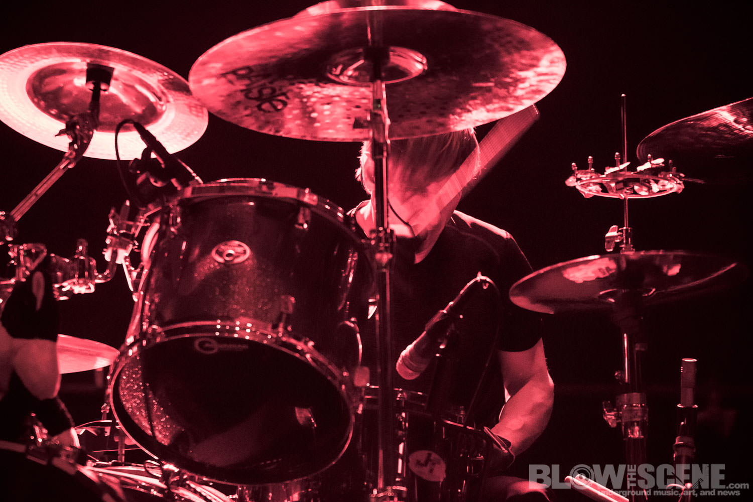 the Melvins019