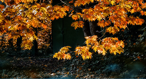 leaves in the forest