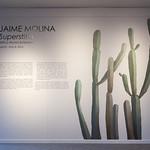 Jaime Molina: Superstitio, Jeffco Alumni Exhibition - Photo by Wes Magyar