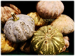 Numerous variety of Cucurbita moschata (Pumpkin, Butternut Pumpkin, Butternut/Winter Squash, Cheese Pumpkin) for sale at a supermarket, 17 Oct 2017