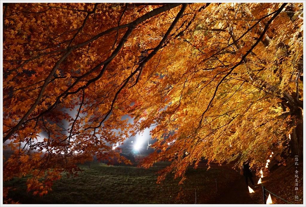 紅葉迴廊-紅葉祭-夜楓-27