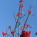 Baies rouge sur fond de ciel