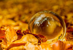 Glass ball laying on the ground in forest