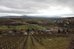 2015-03-01-15-18-26_Les Forts Trotters_à Marlenheim