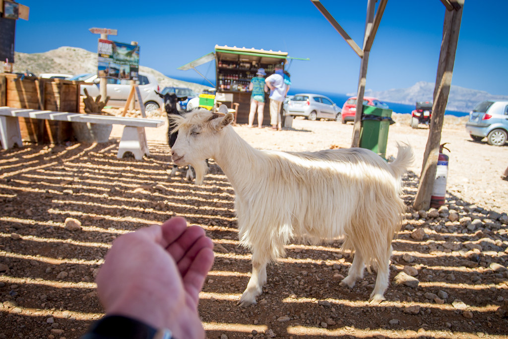Feeding the goat - Crete, Greece