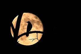 crow moon walk
