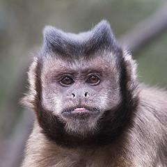 Monkey Face.....Stylin' 2