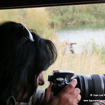 Aves en las lagunas de La Guardia (Toledo). 12-10-2017
