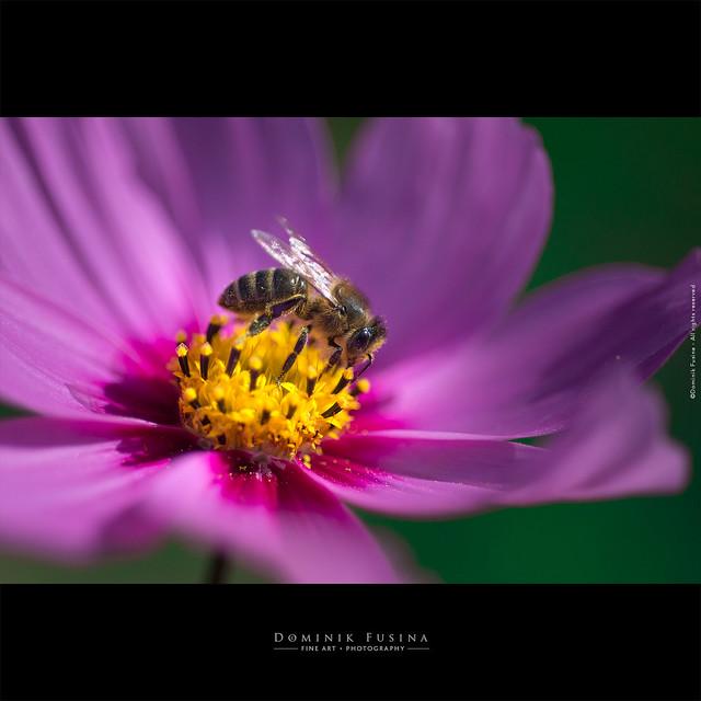 Bee | Beaujolais