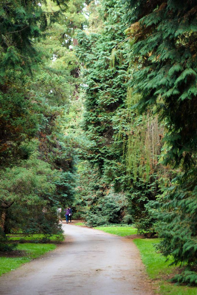 A path through the pine forest at Kew Gardens, London