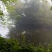 Pendeford Mill, misty autumn morning