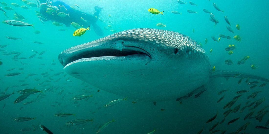 scuba diving in Mafia Island