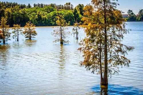Lake Trees
