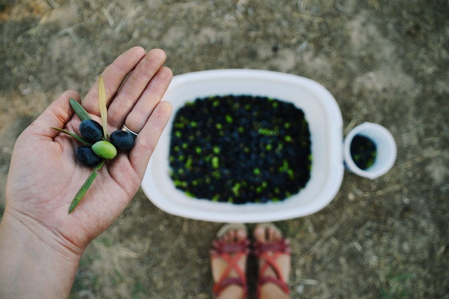 oliivi4