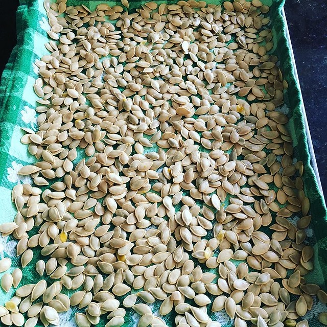 Pumpkin seeds, boiled in salted water. Will let them dry over night and roast tomorrow. 🎃