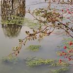 Marais japonisant