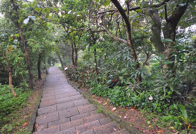 elephant mountain taipei elephant trail