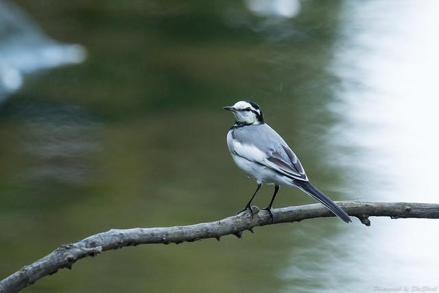 20171026-kingfisher-DSC_6259