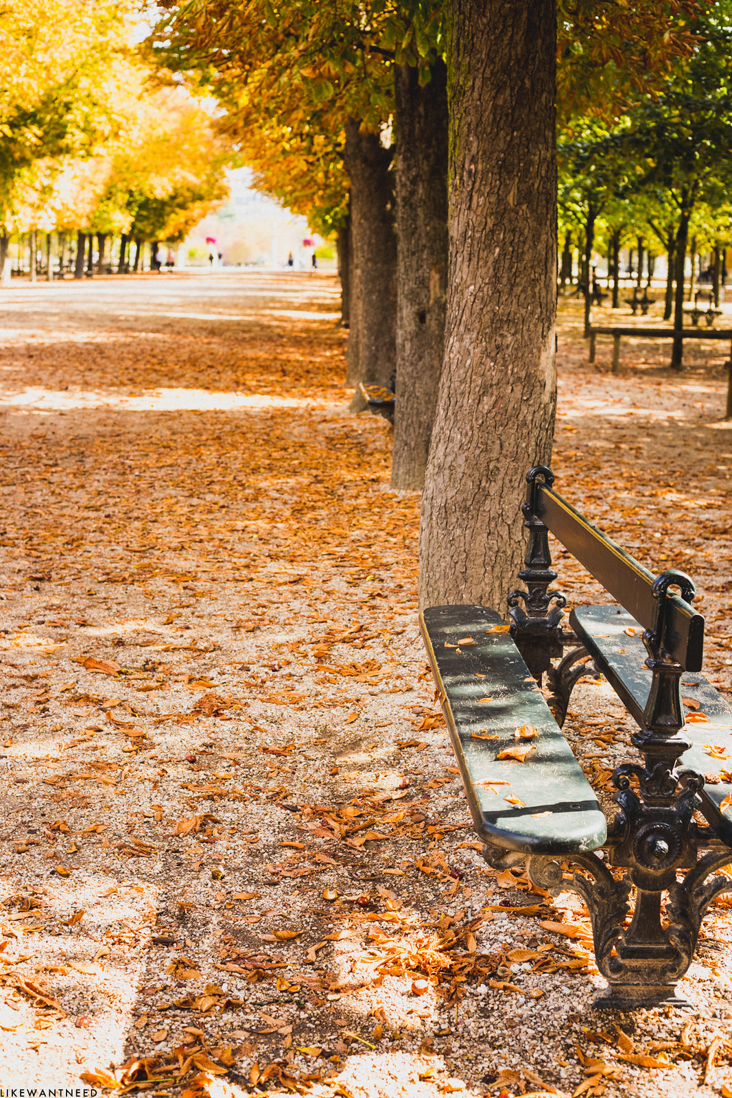 Bench, Jardin du Luxembourg