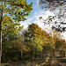 5 Beautiful autumn afternoon at East Blean KWT nature reserve