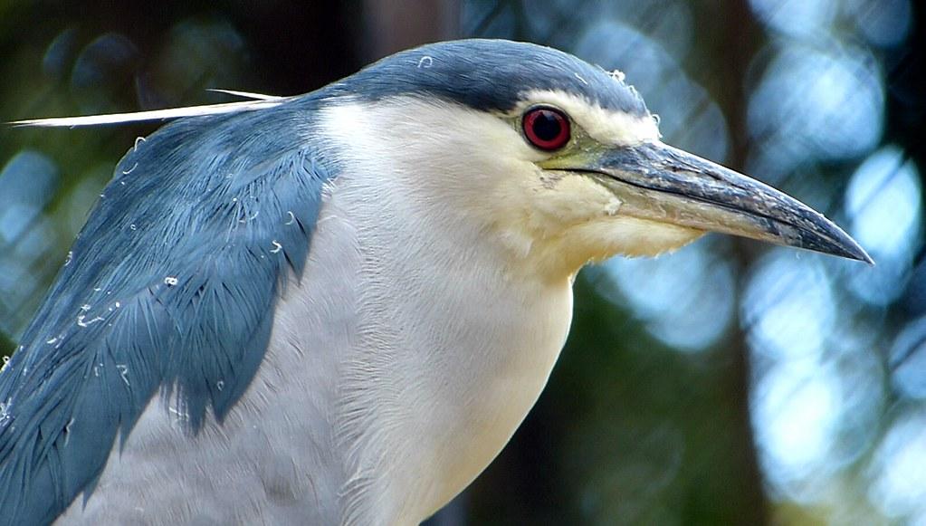 Jardin aux oiseaux Upie