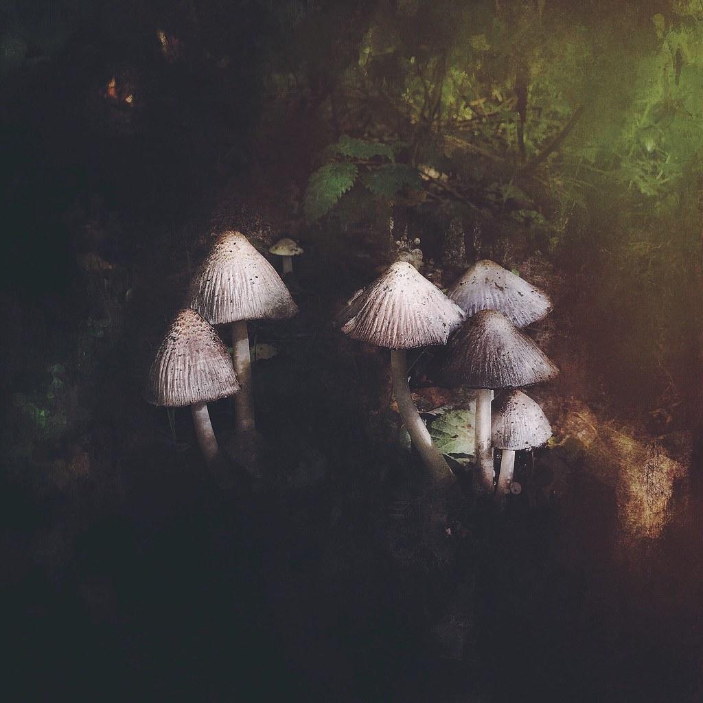365/268  autumn cluster