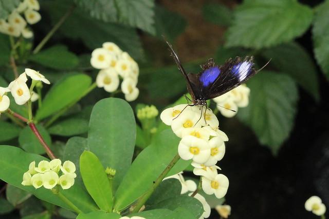 butterfly park Grevenmacher