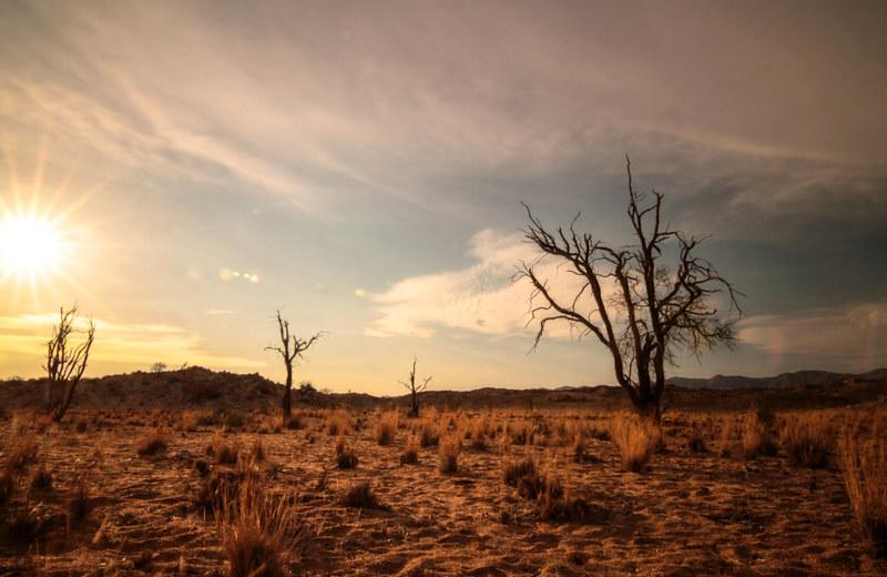 Steppe-Namibia-Landschaftsfotografie