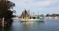 Yamba fishing fleet waiting to go out.