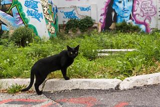 cat240, citizen of Tuzla