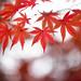 Fall by Jacky Parker Flower Photography