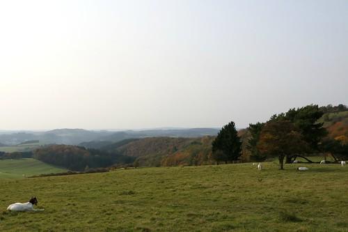 Herbst in der Eifel