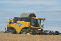 New Holland CX8070 Combine Harvester cutting Winter Barley
