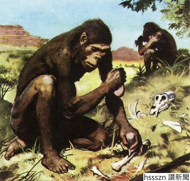 9d10cc819b6b56d00f34c4f23901f5eb--australopithecus-anthropology_736_700